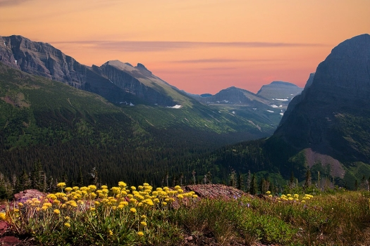 9143,-No Name, Grinnell-Glacier-trail,Yellow-Flowes,-Sunset,-16x24_W5P3044