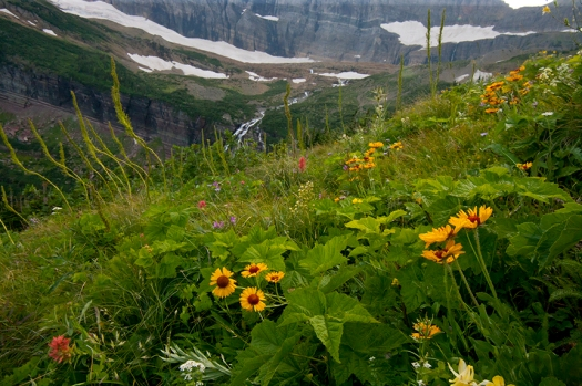 This image has an empty alt attribute; its file name is 10040-wildflowers-and-grinnell-glacier-glacier-np_w5p3264-copy.jpg